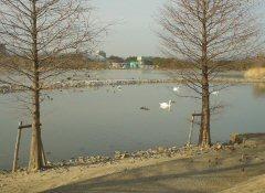 池と湖の違いって何だろう